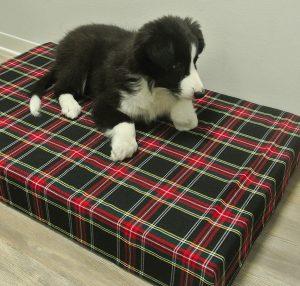 I migliori cuscini per cani classifica del aprile 2018 for Cuscini per cani taglia grande